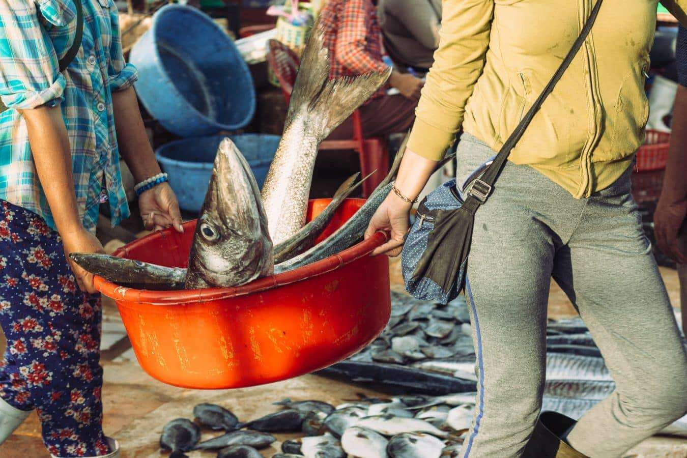 Fish of all shapes and sizes - Hoi An's markets