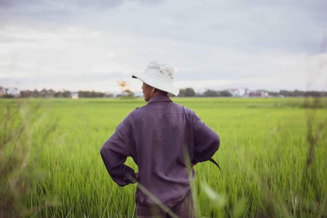 Rice fields - best com ga