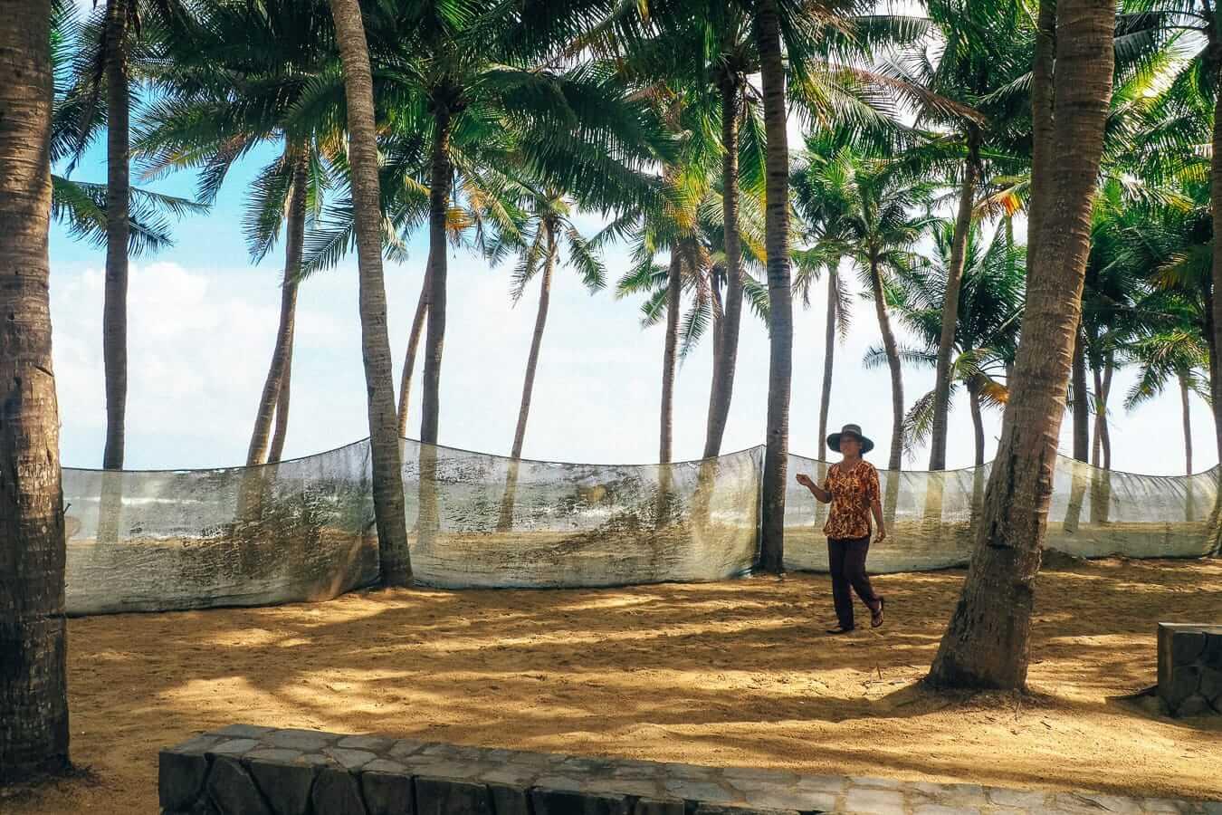 Palm trees on Cua Dai beach: Hoi An's beaches
