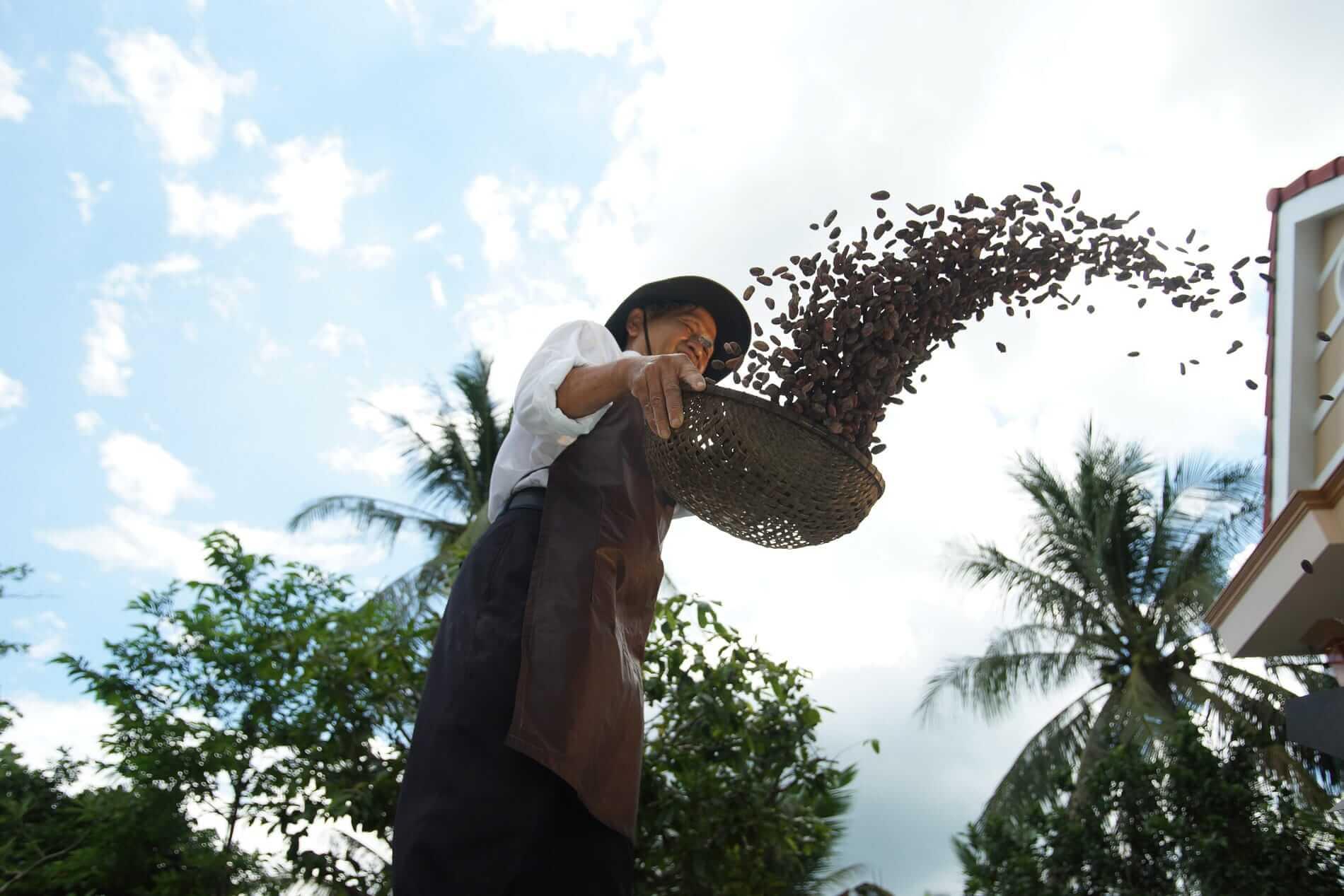 Cocoa farming in Vietnam