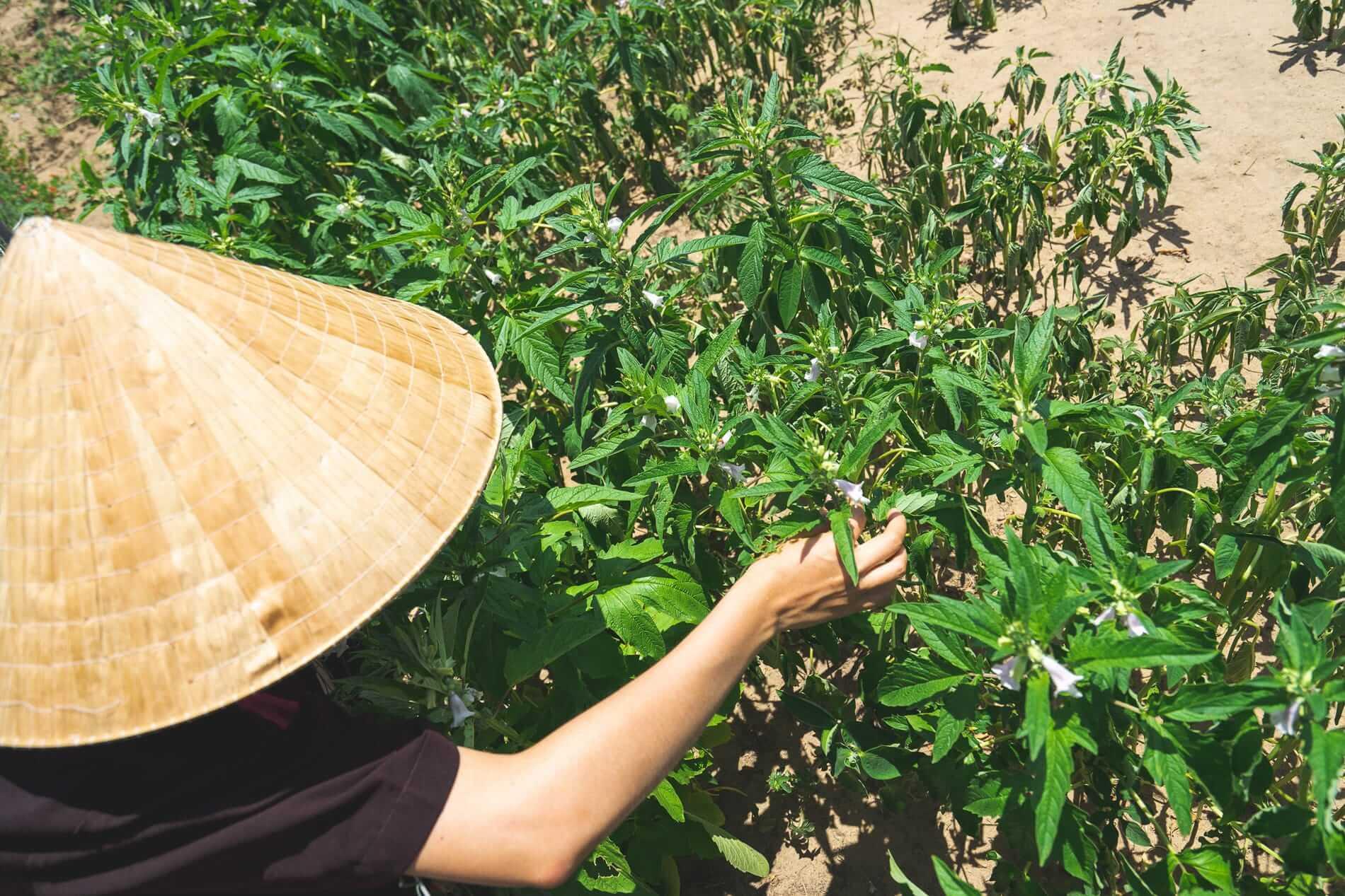 A farmer at work - Tra Que Vegetable Village