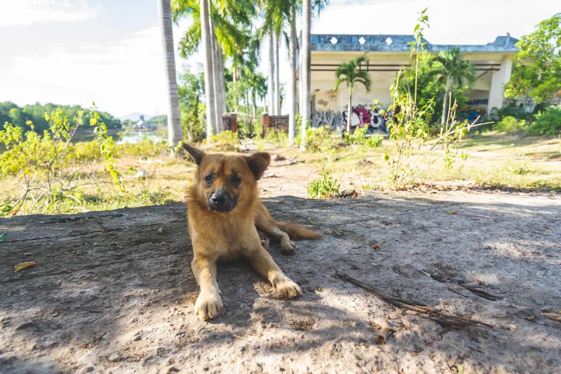 A dog resting at Hue's Abandoned Water Park