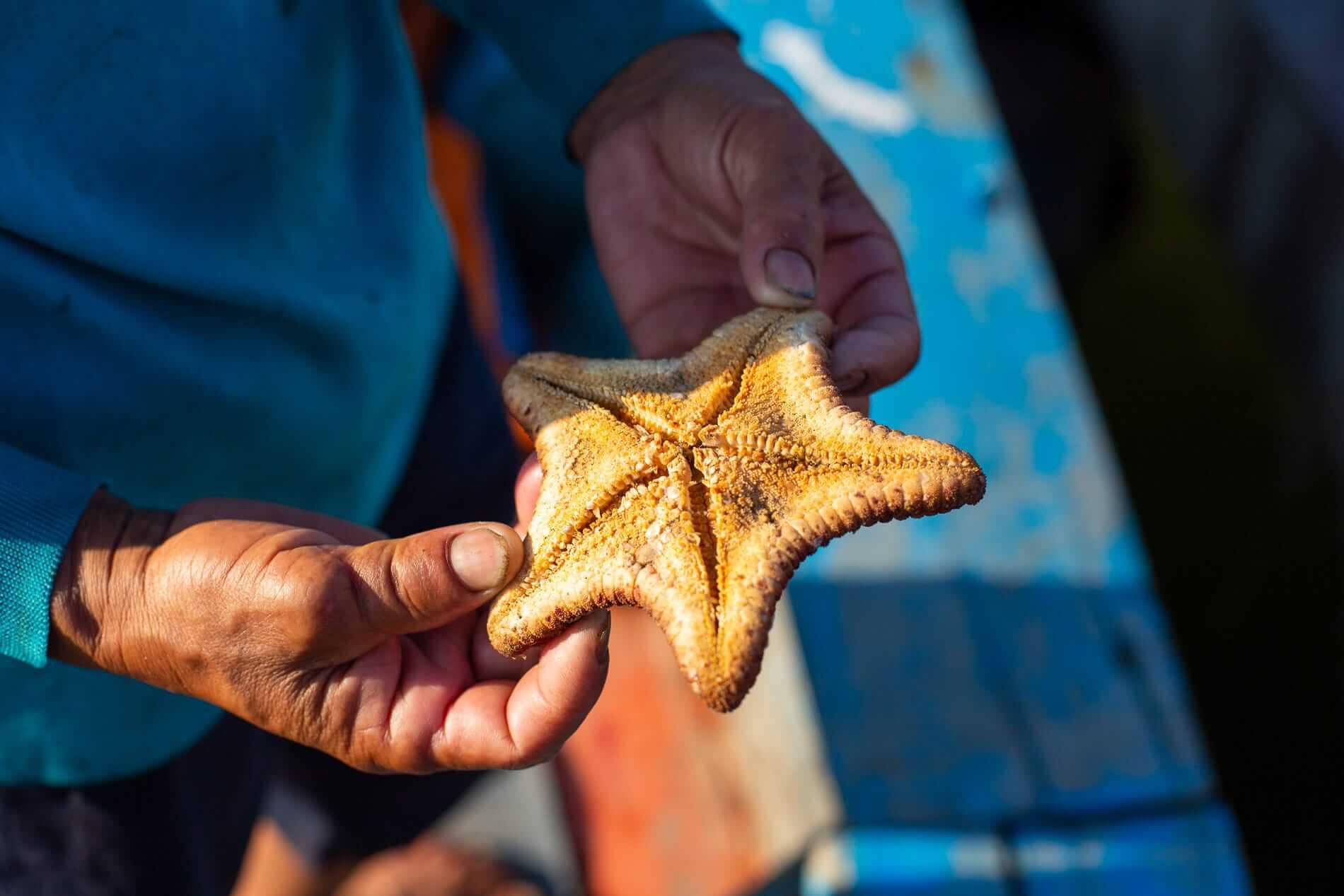 A fisherman holding a starfish
