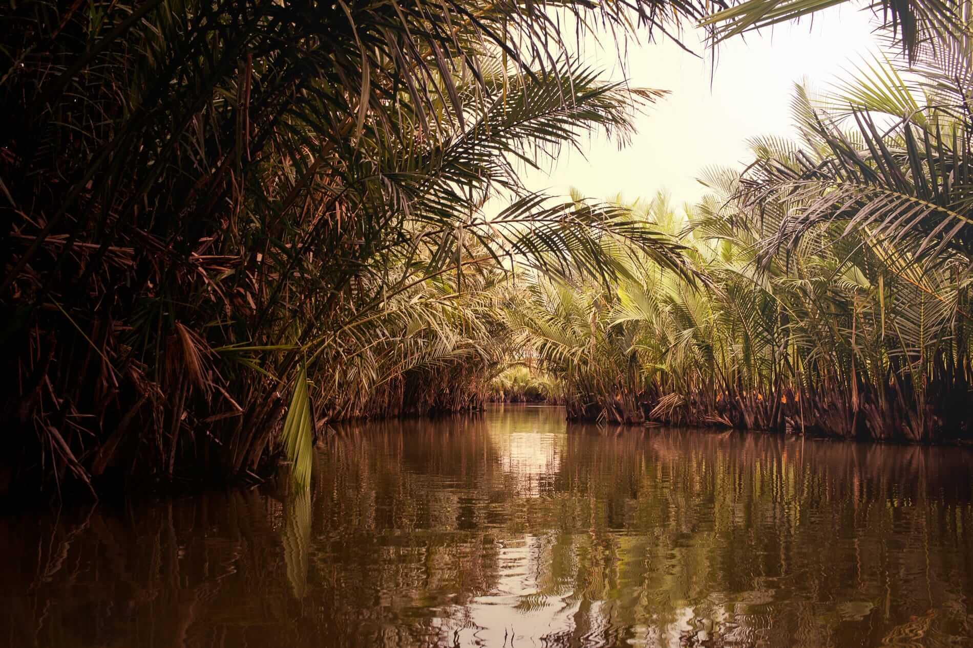 Palm trees and mangrove palms