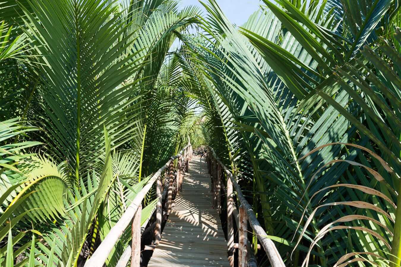 Bamboo walkways