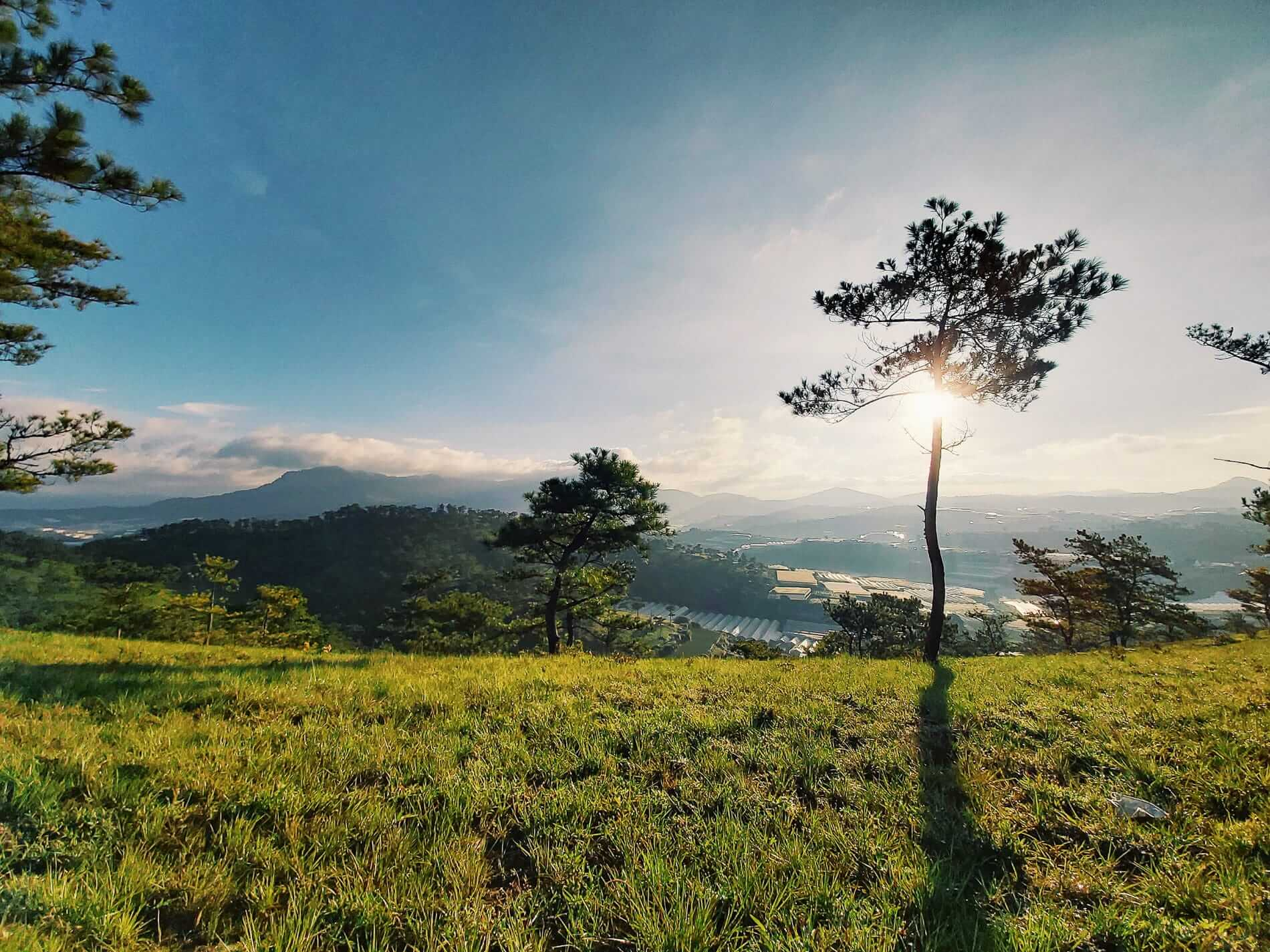 lush green in Da Lat is perfect for nature lovers
