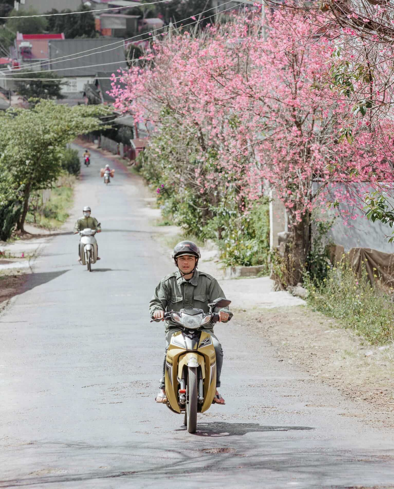 pink blossoms and a motorcyclist