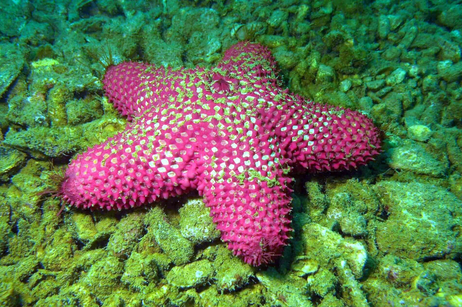 Hoi An's unique sea creatures