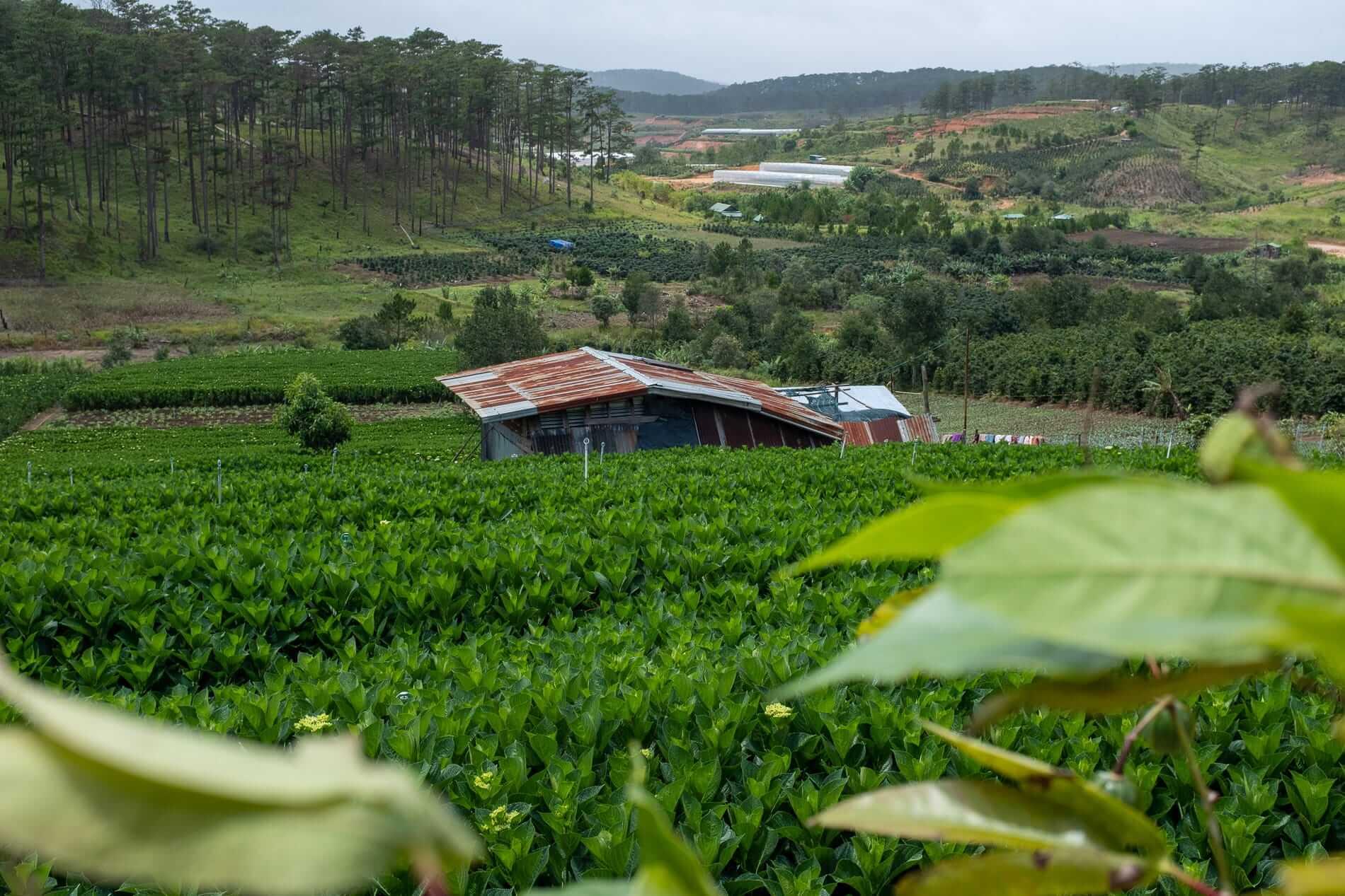 Landscape around Da Lat