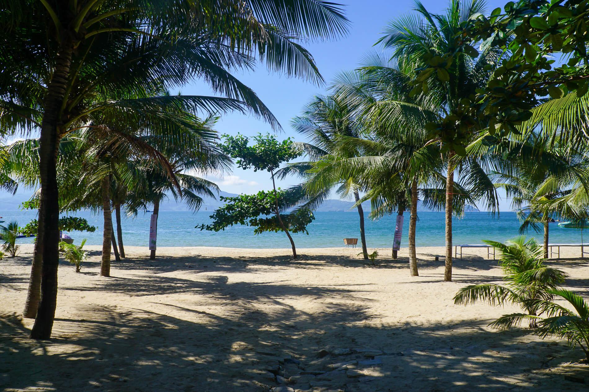 Palm trees line a stretch of secluded beach near Da Nang