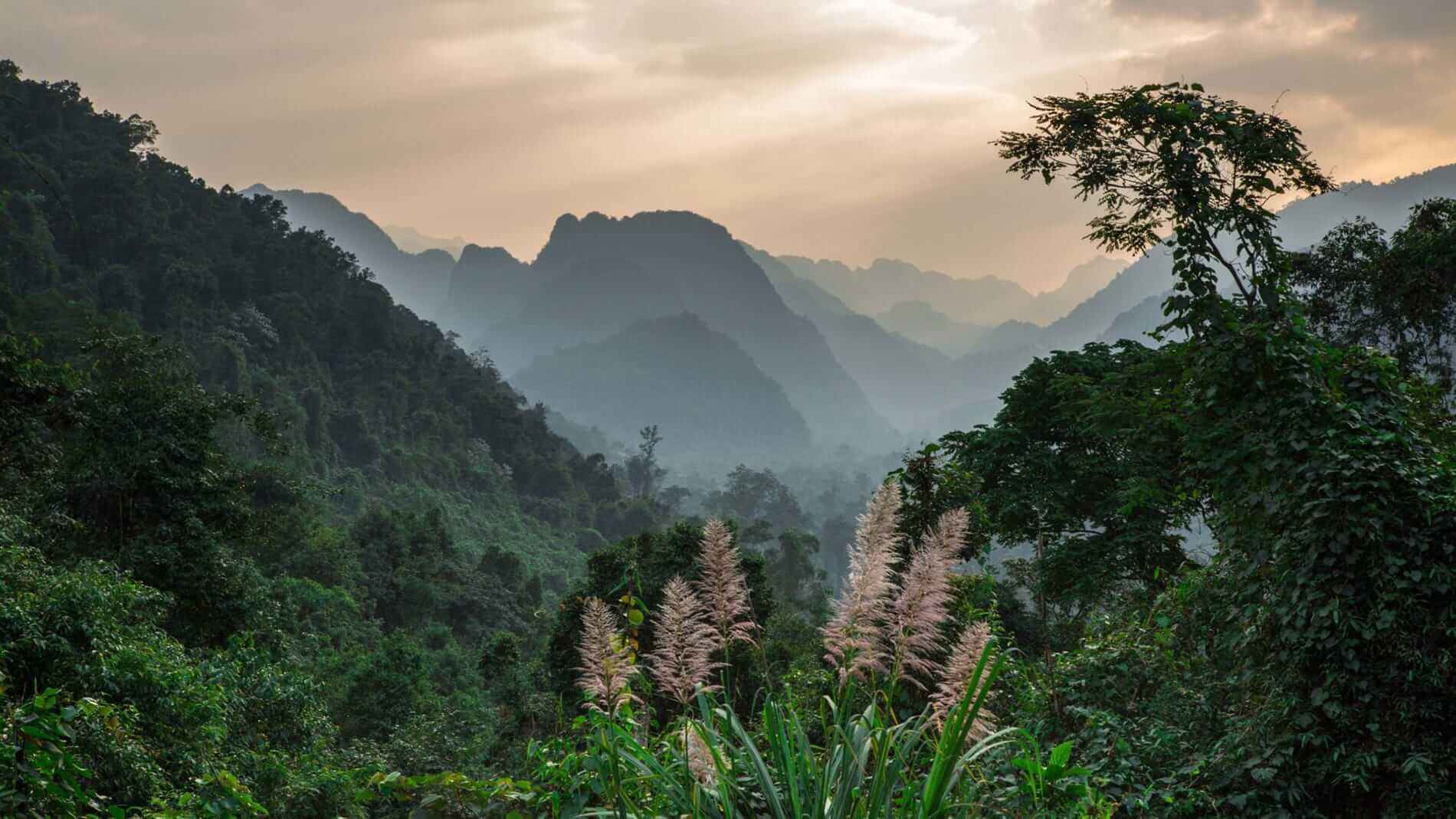 tropical jungle can be found at Phong Nha town
