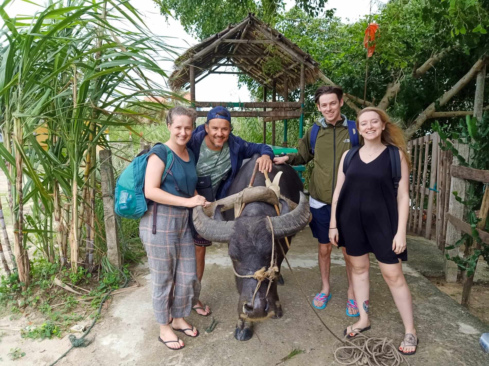 Tourists and a buffalo in Hoi An