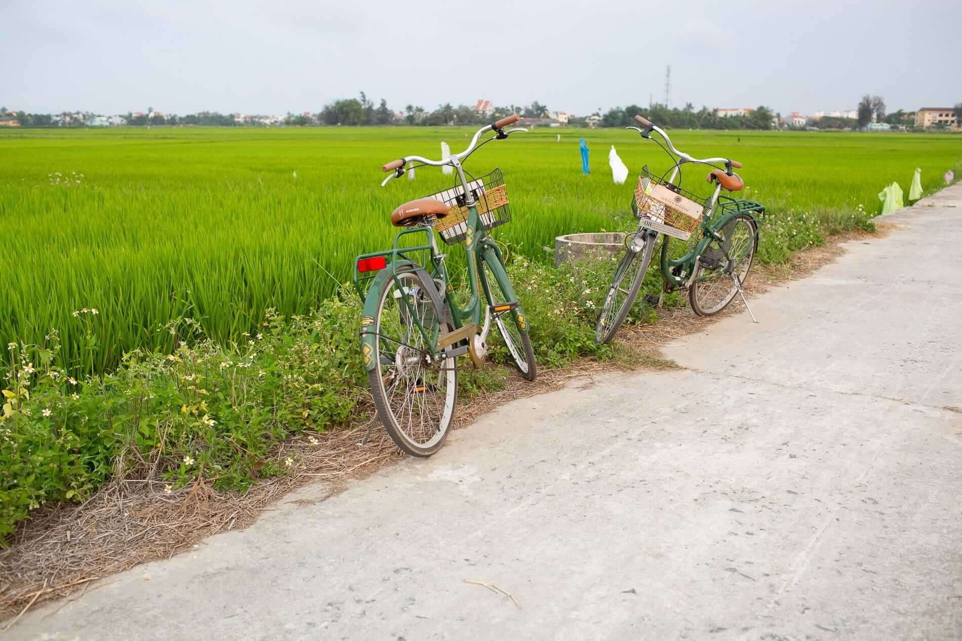 bicycle ride through the paddies