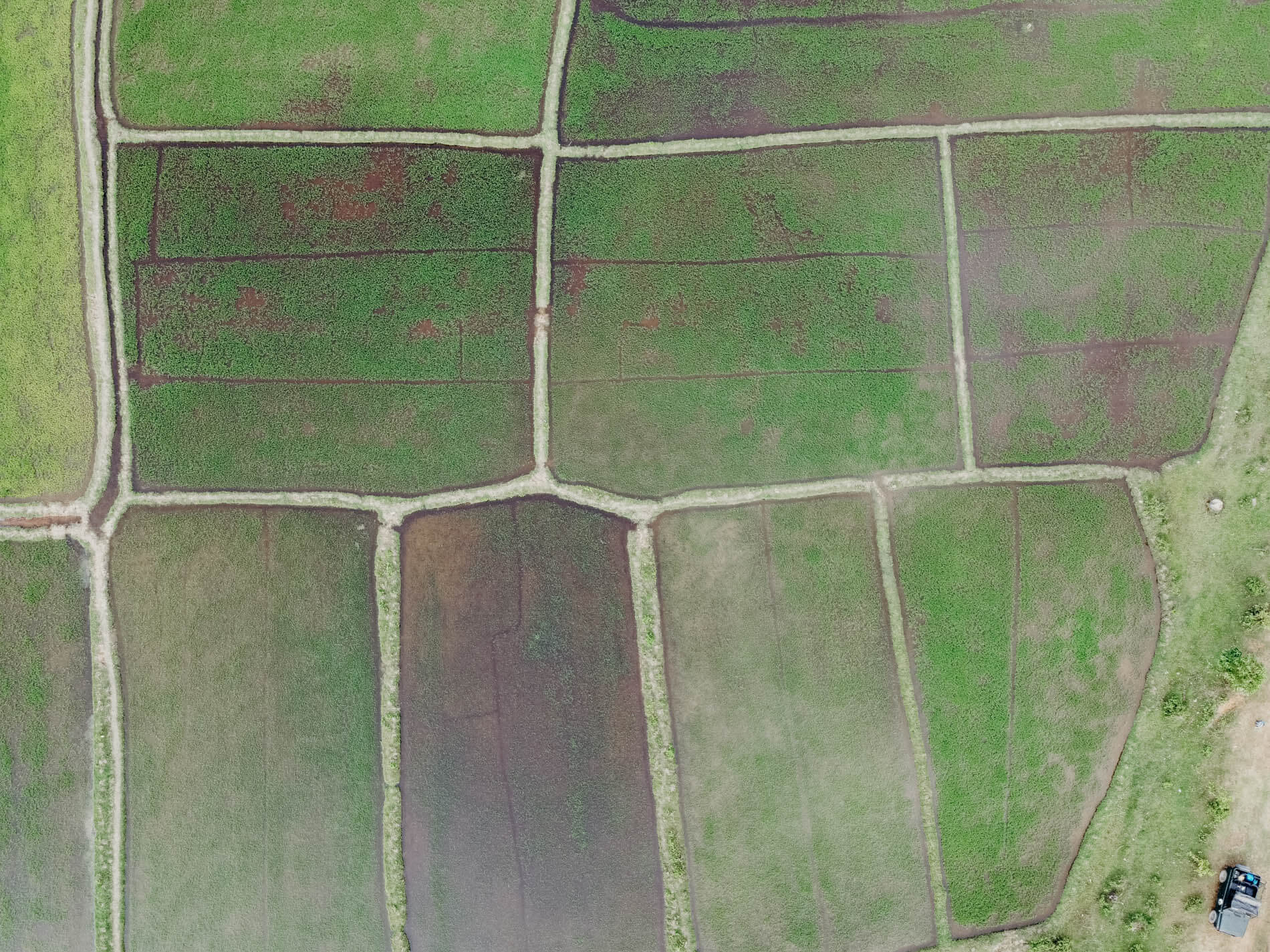 aerial shot of an expansive rice paddy